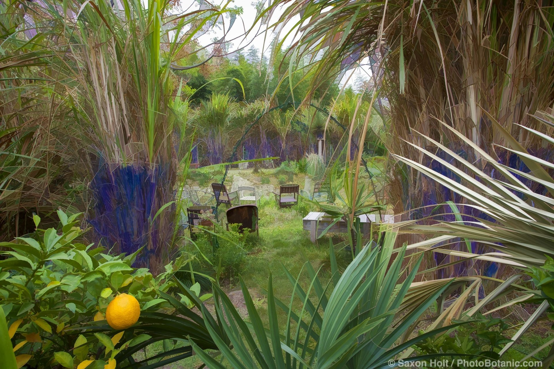 John Greenlee's Pomona garden