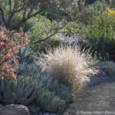 Seeing the Native Plant Garden