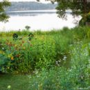 Garden Revolution with Larry Weaner