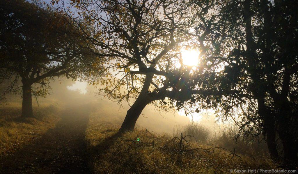 Cherry Hill Novato with tule fog n morning light