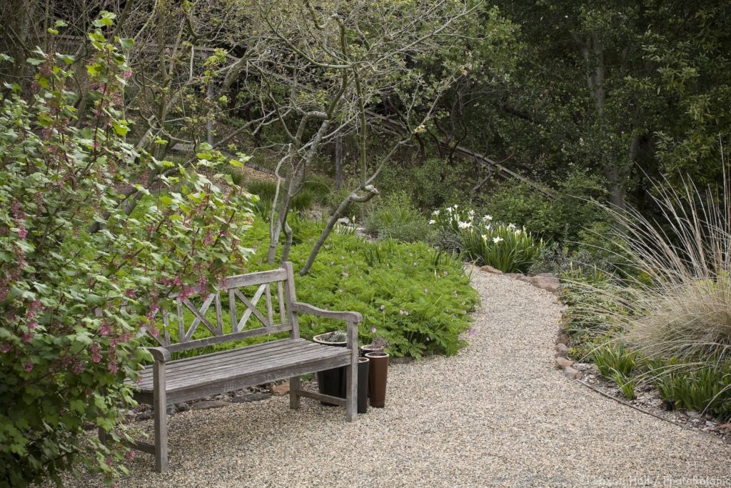Bench on gravel, crushed rock patio in drought tolerant California native plant garden