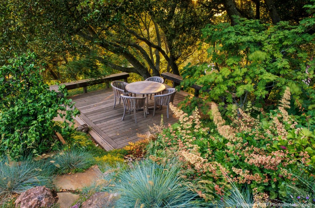 Deck garden room under California live oak trees (Quercus agrifolia) in afternoon light of summer-dry garden
