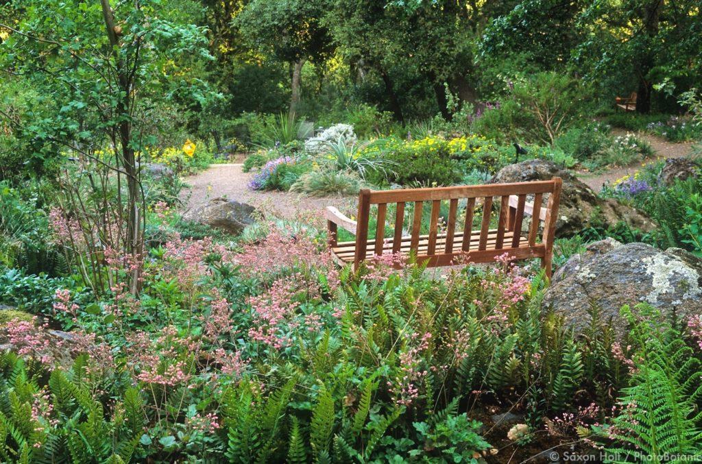 Bench by garden path in California native garden. Phil Johnson Design