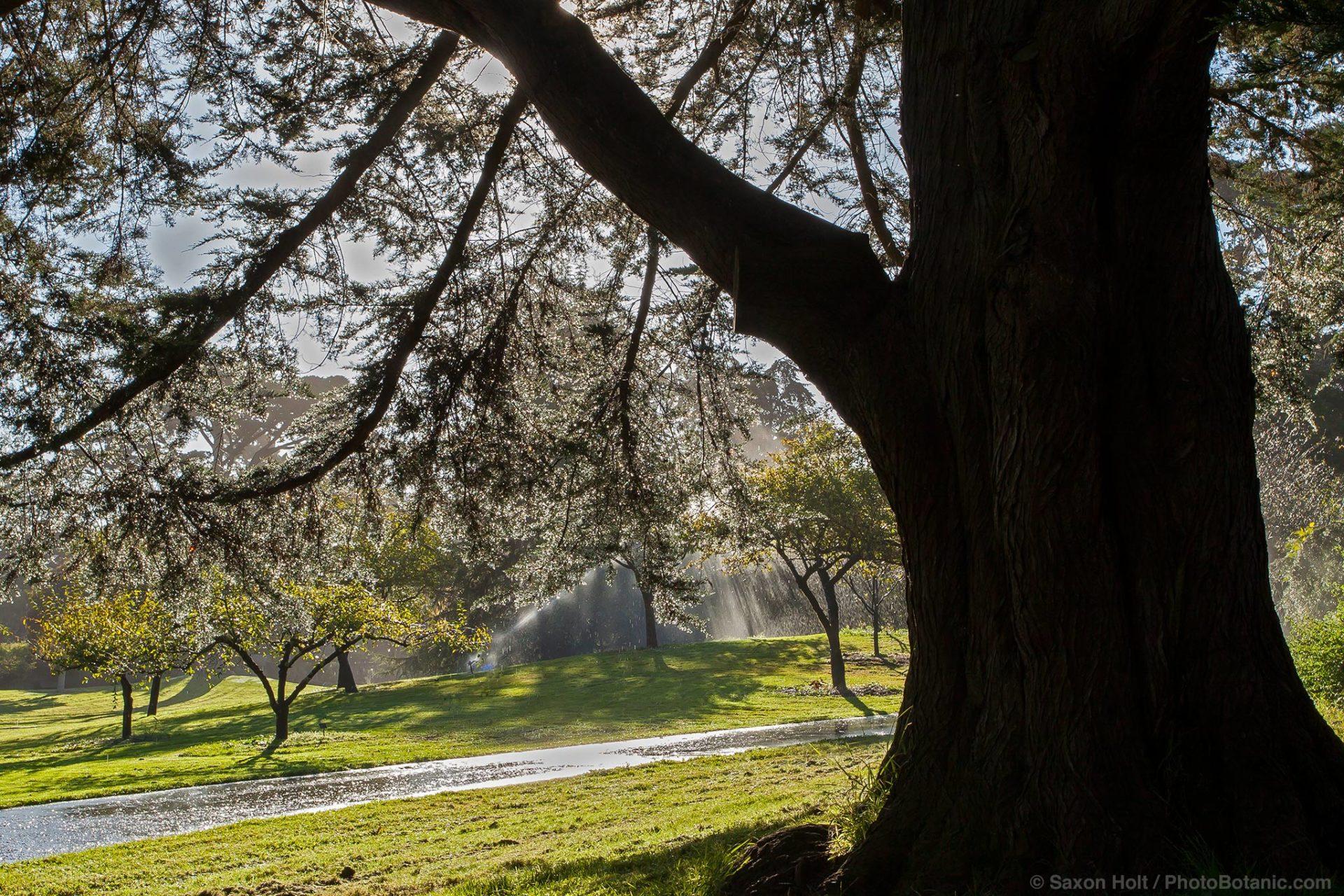 morning sprinklers in San Francisco Botanical Garden