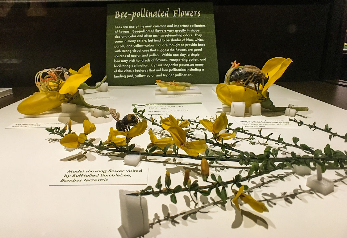 Glass Flowers Exhibit Harvard Museum of Natural History; The Ware Collection of Blaschka Glass Models of Plants