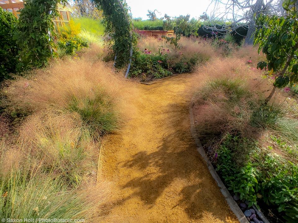 Pathway with Muhly Grass - Sunset Demonstration garden - Cornerstone Gardens, Sonoma