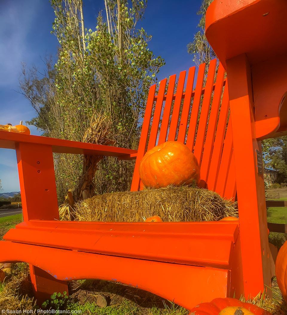 Orange Adirondack chair with pumpkins as entry display to Cornerstone Gardens, Sonoma