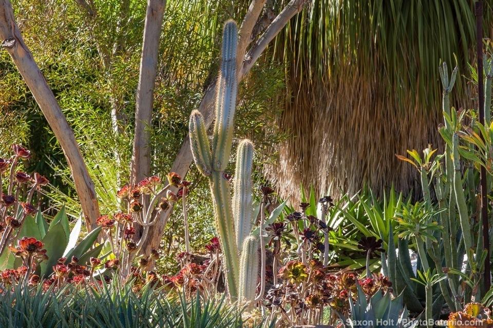 Ruch Bancroft Garden in Walnut Creek, California
