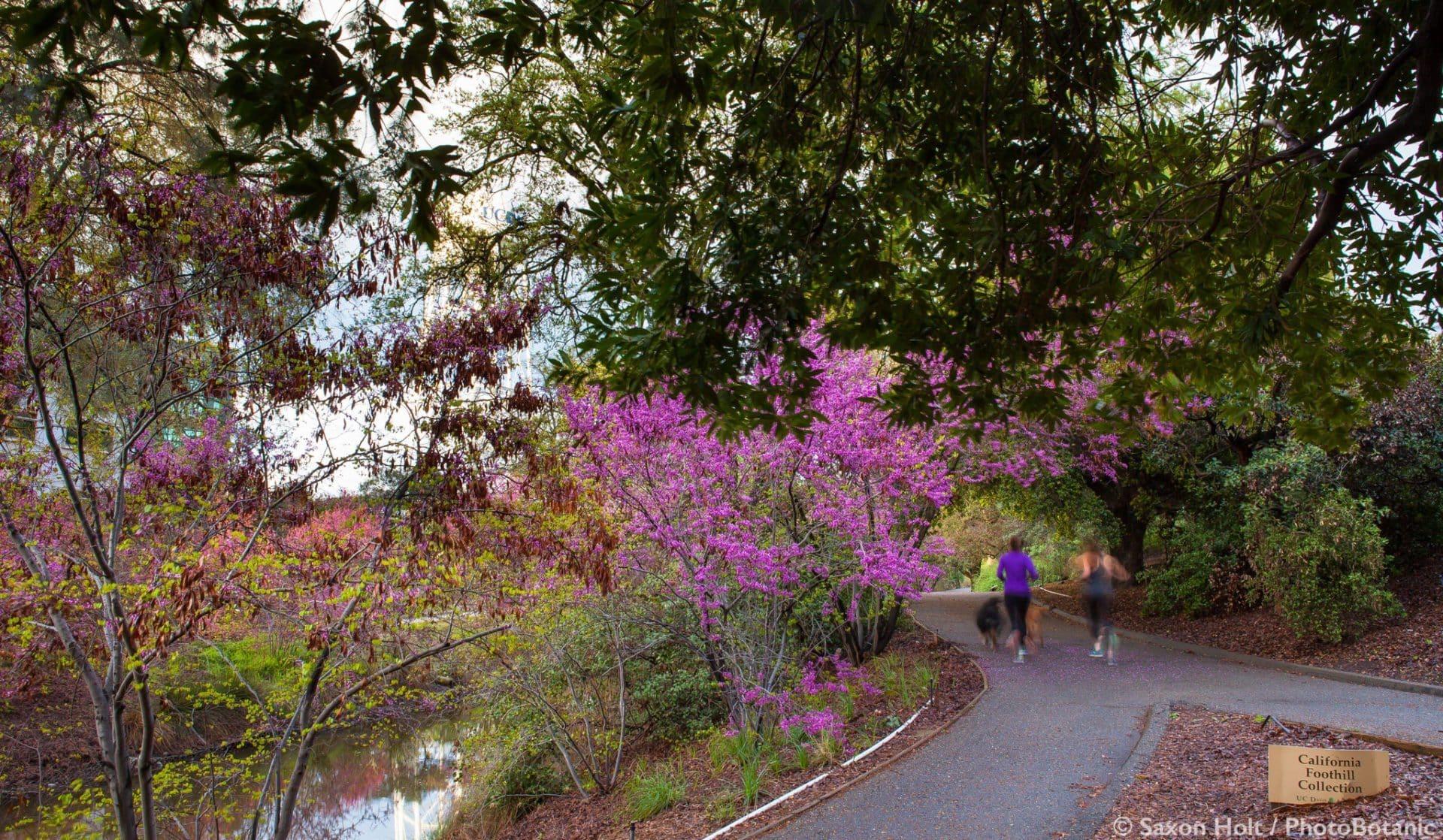 University of California Davis Arboretum