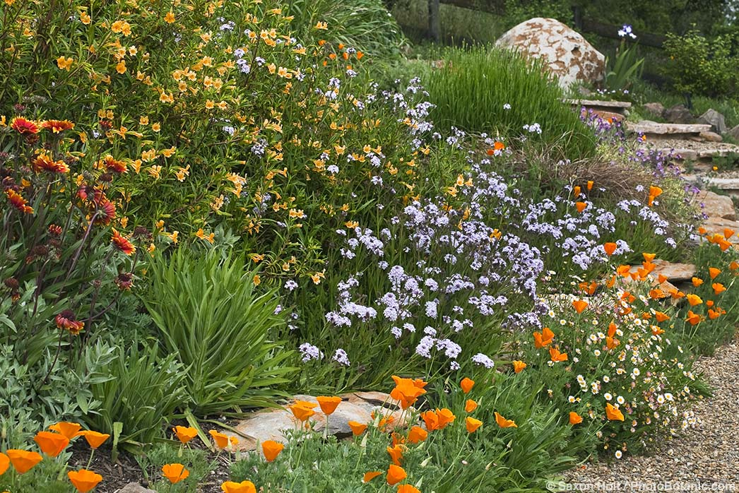 drought tolerant flower garden